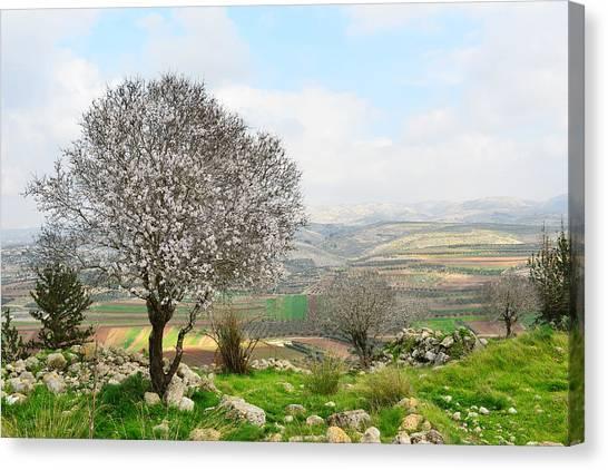Wild Almond Tree In Beautiful Scenery Canvas Print