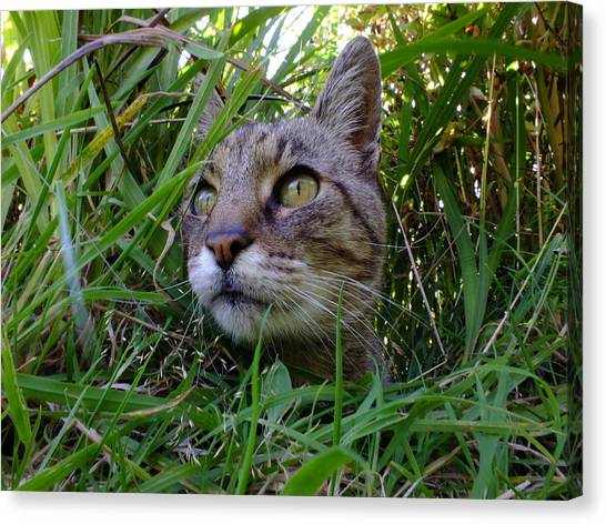 Wild Beast In The Long Grass Canvas Print