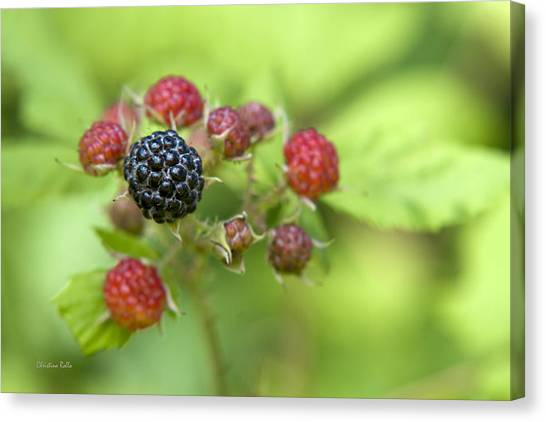 Wild Berries Canvas Print - Wild Berries by Christina Rollo