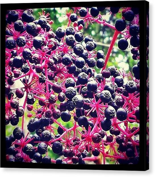 Wild Berries Canvas Print - #wild #berries #country #westernpa by Tom Bush