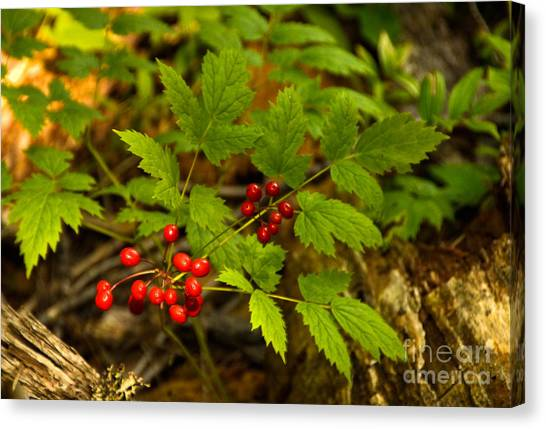 Wild Berries Canvas Print