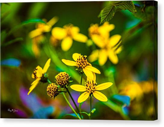 Flowers - Wild Bouquet  Canvas Print by Barry Jones
