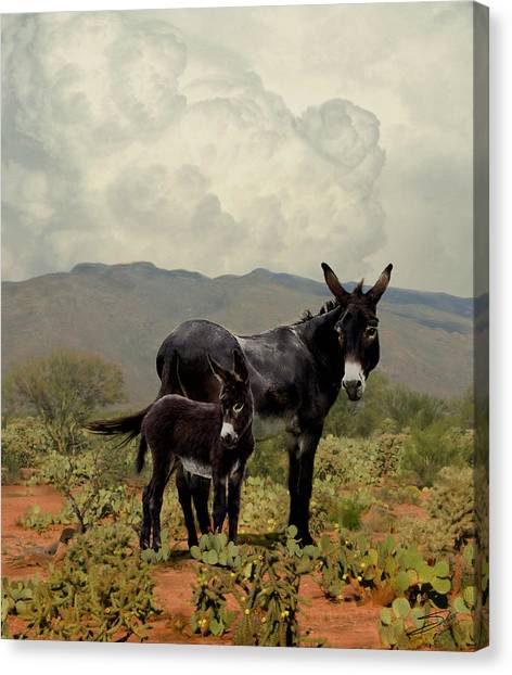 Wild Burros From The Gold Rush Canvas Print