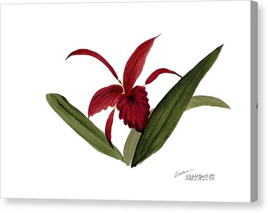 Wild Chinese Orchid #3 Canvas Print