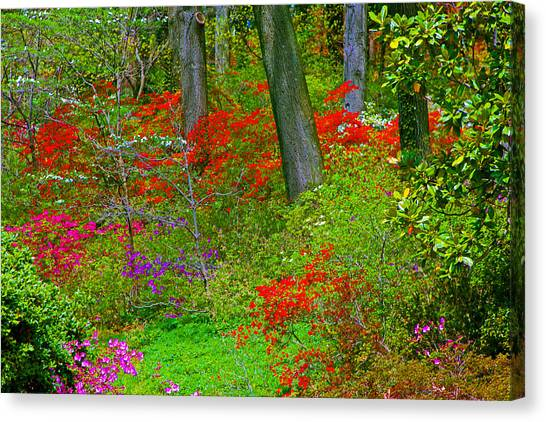 Wild Flower Garden Canvas Print