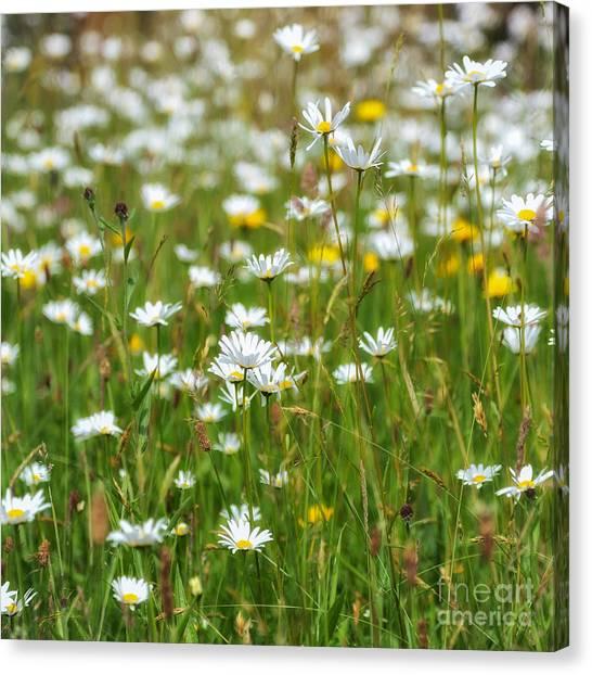 Clover Canvas Print - Wild Flower Meadow by Janet Burdon