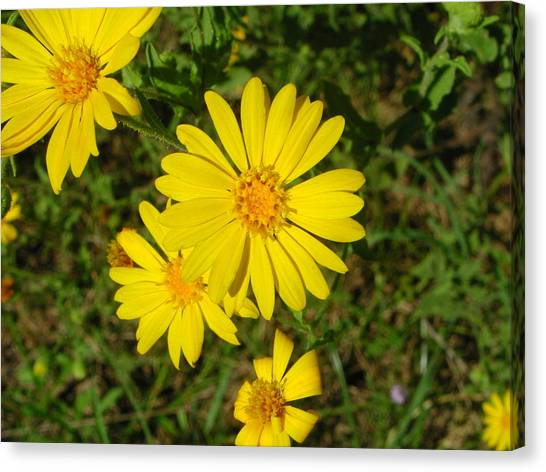 Wild Flower4 Canvas Print by Michael Rushing