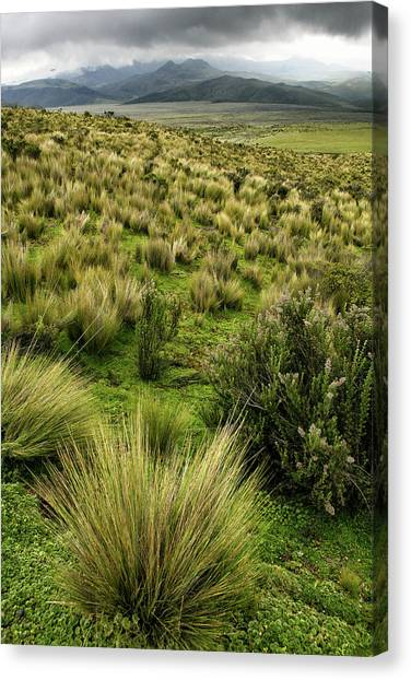 Cotopaxi Canvas Print - Wild Flowers And Rolling Landscape by David Santiago Garcia