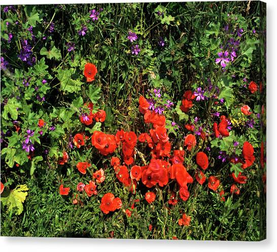 Andy Bloom Canvas Print - Wild Flowers by Andy Williams/science Photo Library