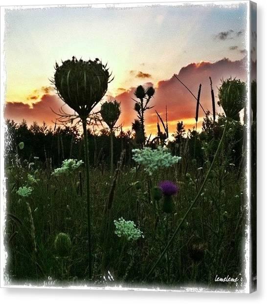Wetlands Canvas Print - Wild Flowers Fly by Stefanie Roberts