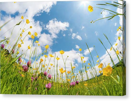Blade Of Grass Canvas Print - Wild Flowers In A Meadow by Tbradford