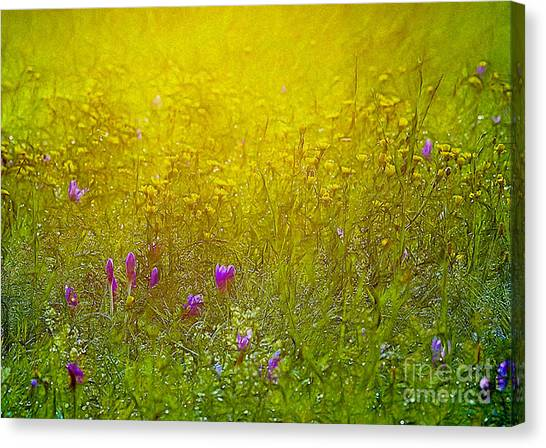 Wild Flowers In Morning Light Canvas Print