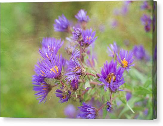 Wild Flowers In The Fall Canvas Print