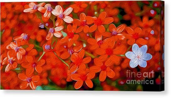 Blossom Canvas Print - Wild Flowers by Jon Neidert