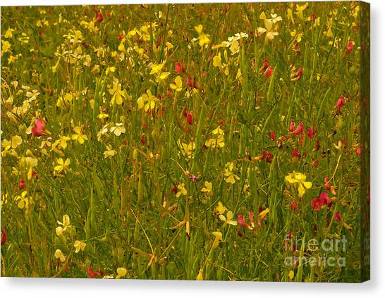 Canvas Print featuring the photograph Wild Flowers by Susan Parish