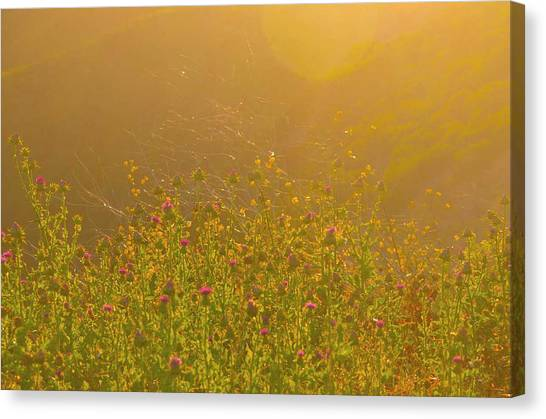 Wild Flowers With Webs Canvas Print