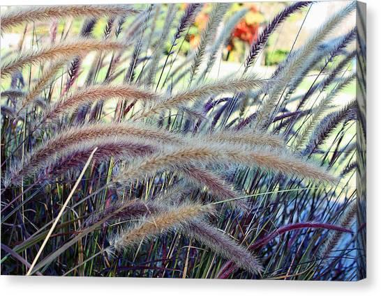 Wild Grasses In Autumn Canvas Print