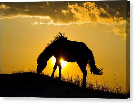 Wild Horse And Setting Sun Canvas Print