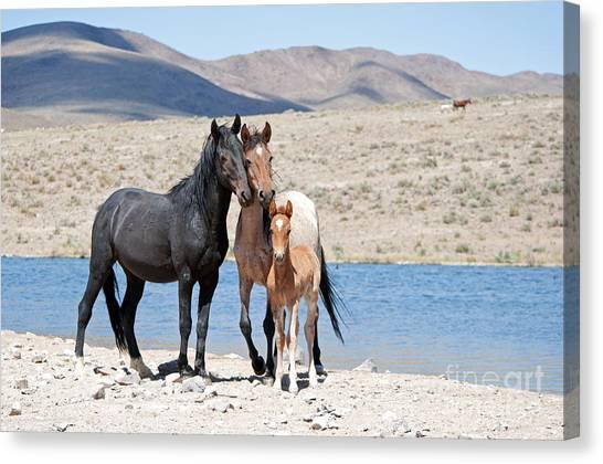 Wild Horse Family Canvas Print