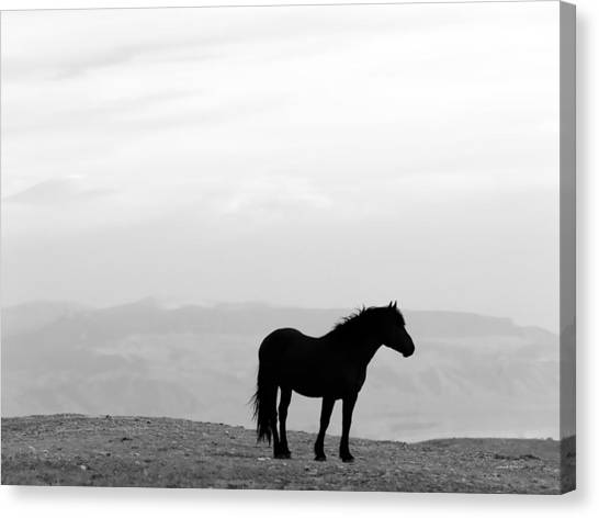 Wild Horse Silhouette Bw Canvas Print by Leland D Howard