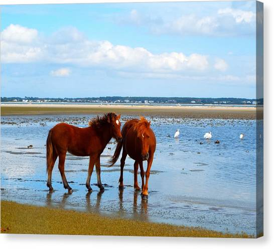 Wild Horses And Ibis 2 Canvas Print