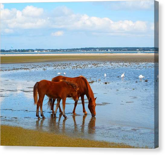 Wild Horses And Ibis Canvas Print