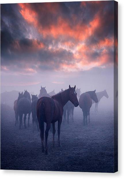 Turkeys Canvas Print - Wild Horses by Cuma Cevik