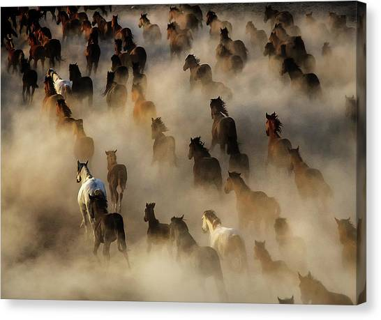Crowd Canvas Print - Wild Horses by Mehmet Bedir