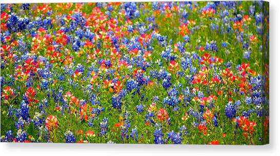 Wild In Texas Canvas Print