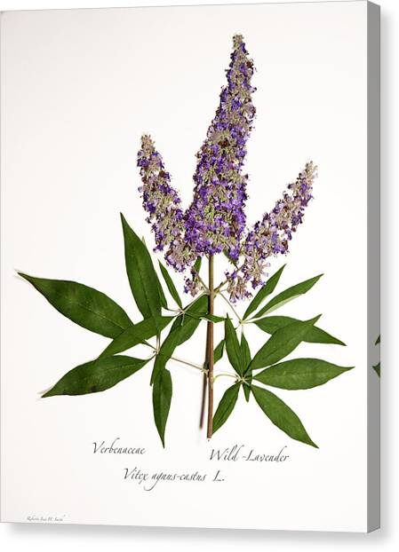 Wild-lavender 1 Canvas Print