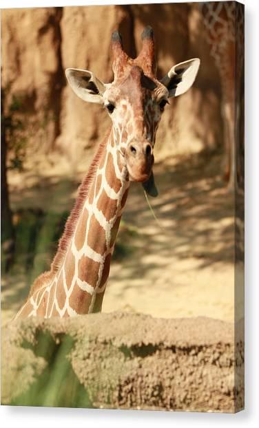 Wild Look Canvas Print by Tinjoe Mbugus