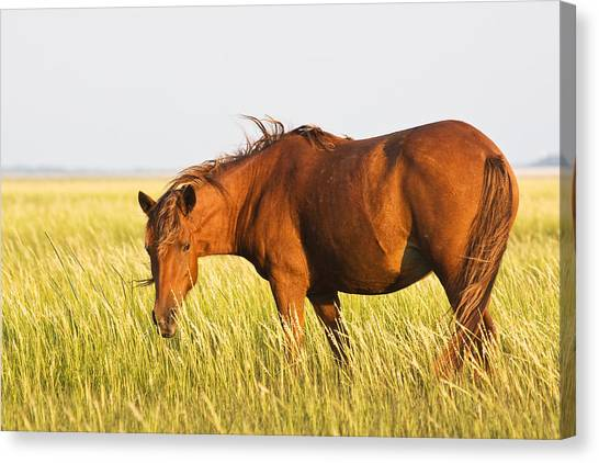 Wild Mustand On The Tidal Flats Canvas Print