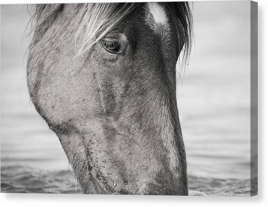 Wild Mustang Feeding Canvas Print