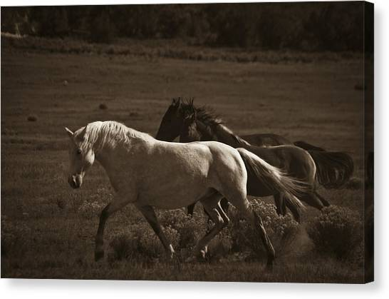 Canvas Print featuring the photograph Wild Mustangs Of New Mexico 10 by Catherine Sobredo