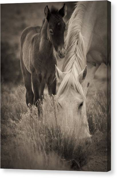Wild Mustangs Of New Mexico 19 Canvas Print