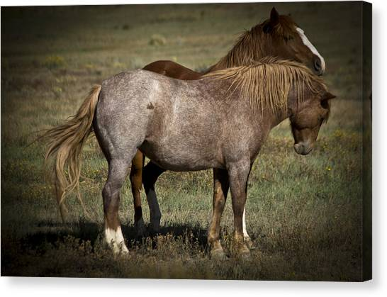Canvas Print featuring the photograph Wild Mustangs Of New Mexico 2 by Catherine Sobredo