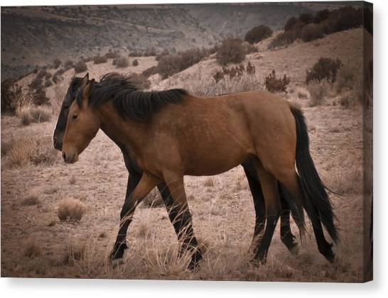 Canvas Print featuring the photograph Wild Mustangs Of New Mexico 23 by Catherine Sobredo