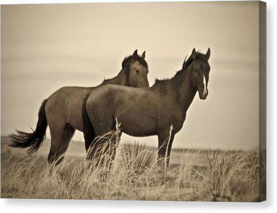 Canvas Print featuring the photograph Wild Mustangs Of New Mexico 3 by Catherine Sobredo