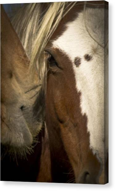 Wild Mustangs Of New Mexico 32 Canvas Print