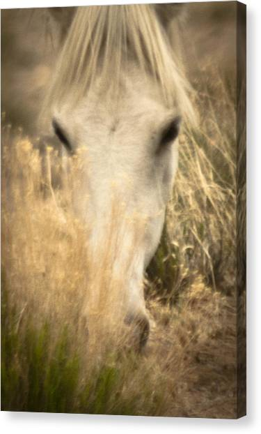 Wild Mustangs Of New Mexico 36 Canvas Print