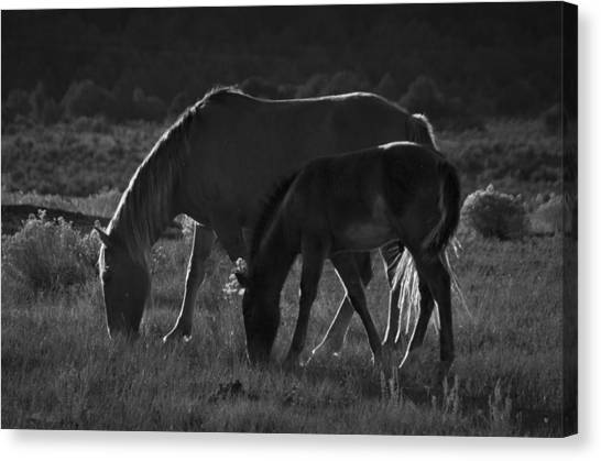 Wild Mustangs Of New Mexico 7 Canvas Print