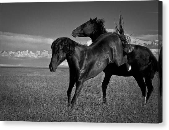 Wild Mustangs Of New Mexico 9 Canvas Print