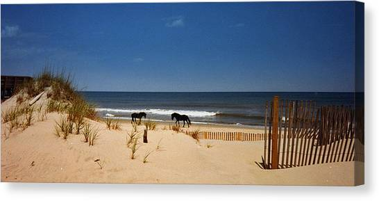 Wild On The Beach Canvas Print