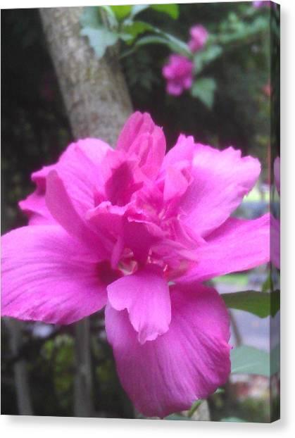 Wild Pink Rose Canvas Print by Kim Martin