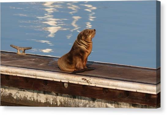 Wild Pup Sun Bathing Canvas Print