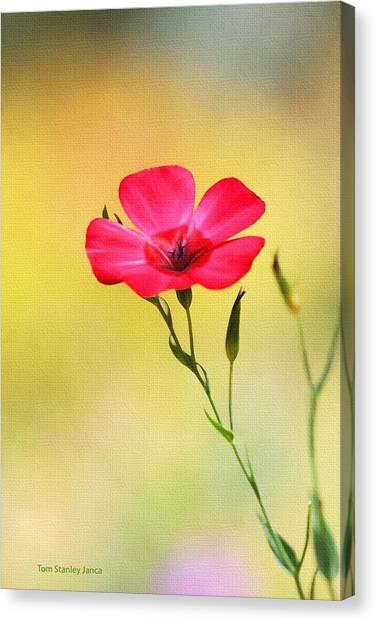 Wild Red Flower Canvas Print