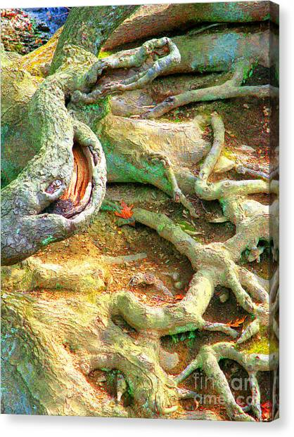 Wild Roots By Christopher Shellhammer Canvas Print