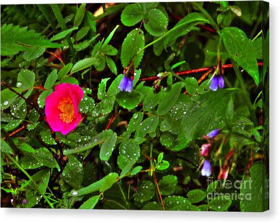 Wild Rose And Bluebell Canvas Print