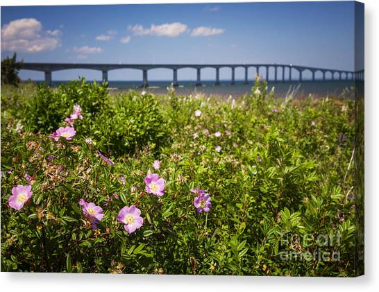 New Brunswick Canvas Print - Wild Roses At Confederation Bridge by Elena Elisseeva