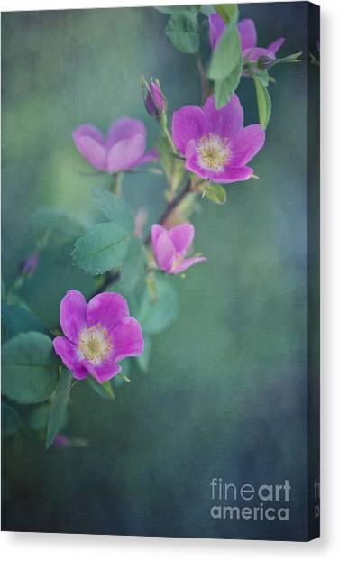 Yukon Canvas Print - Wild Roses by Priska Wettstein